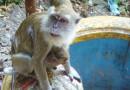 #MAL: Affengeil! Ein Tag im Hindu Tempel