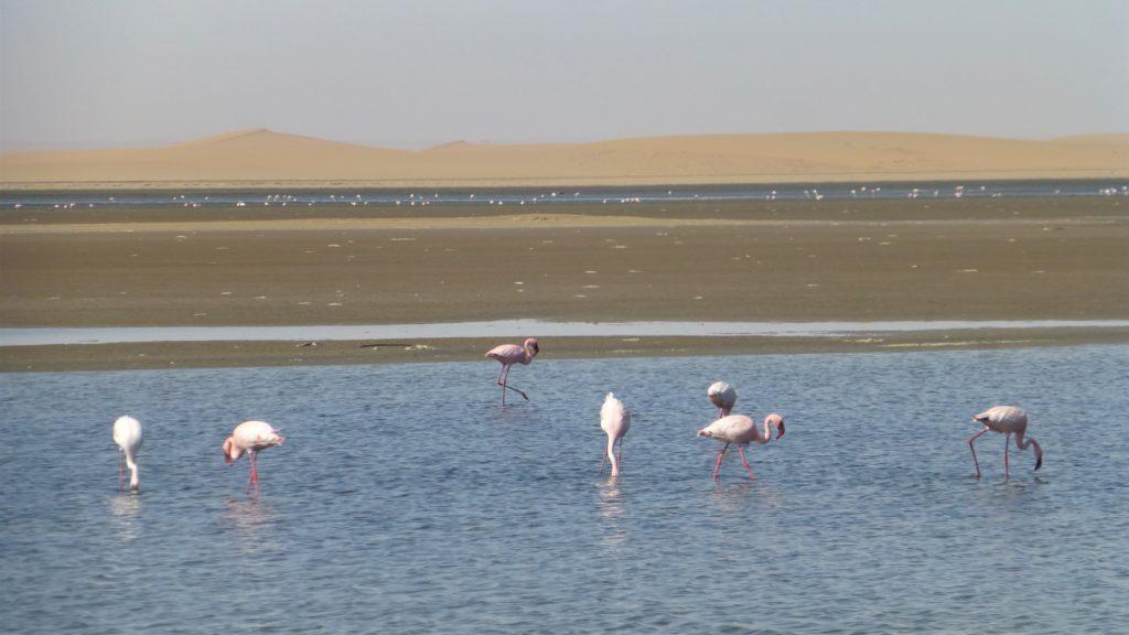 Flamingos bei Walfisch Bay